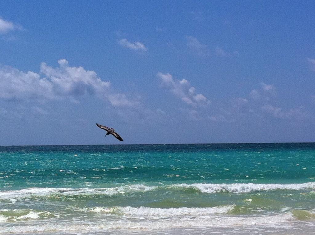 Pelican at Sian Ka'an Beach