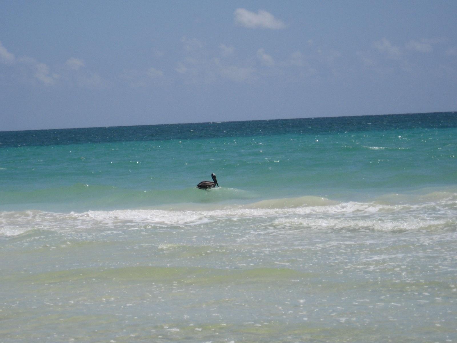 SK pelican sea