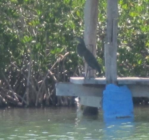 bird_bioreserve